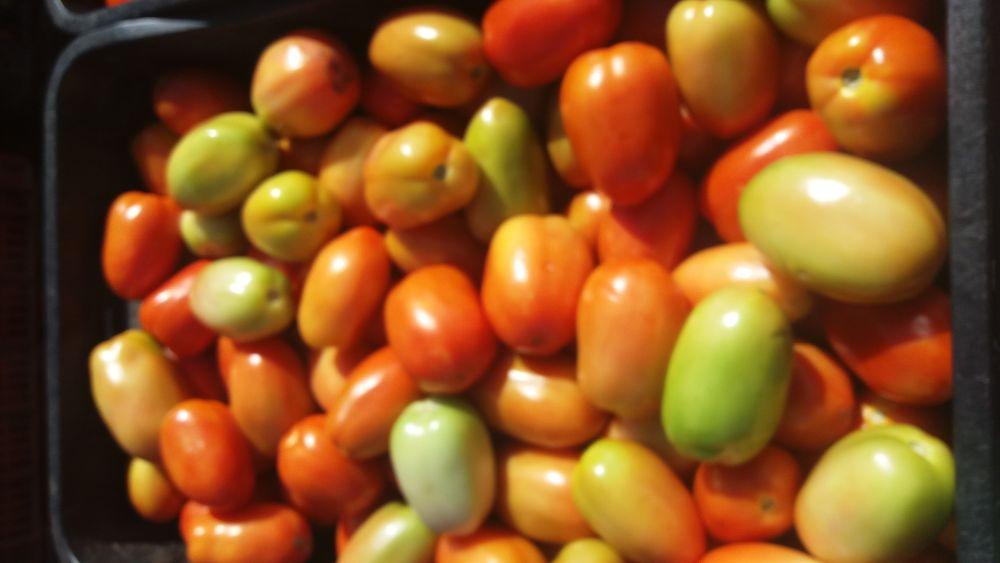 terça-feira (06) no Mercado do produtor de Juazeiro BA